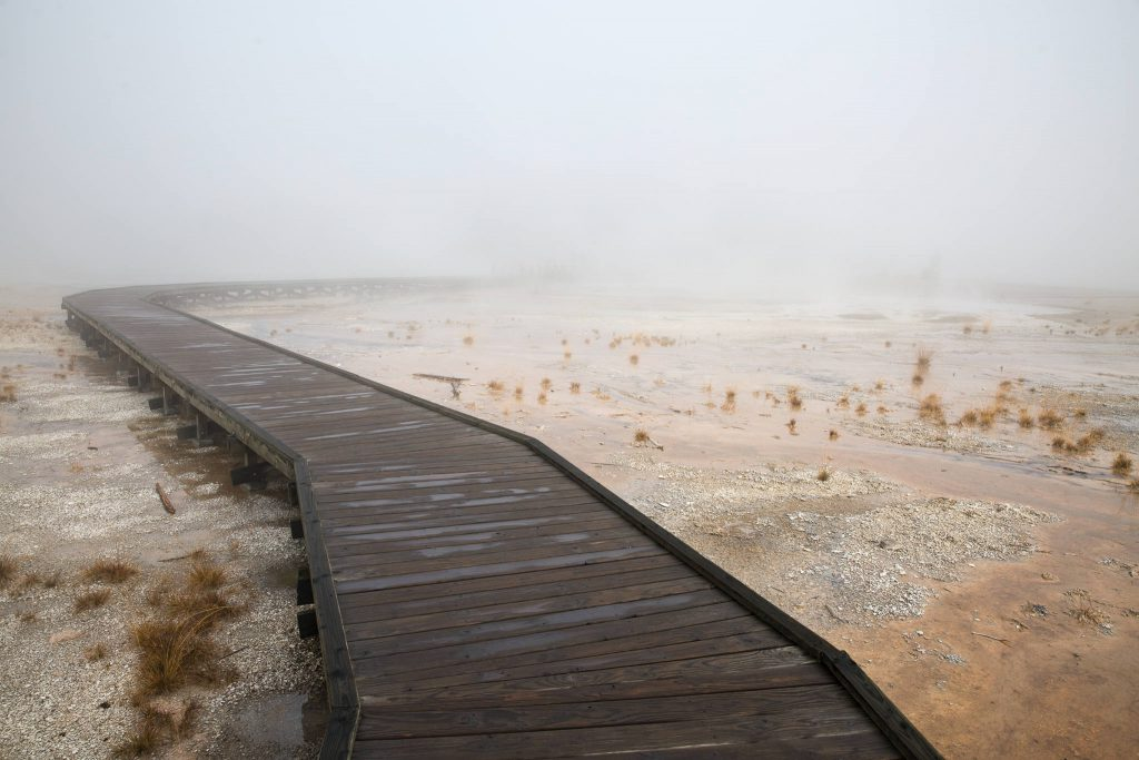 Yellowstone - Norris Geyser Basin (3514)