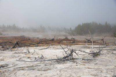 Yellowstone - Norris Geyser Basin (3552)