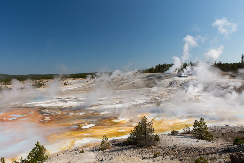 Yellowstone - Norris Geyser Basin (3606)