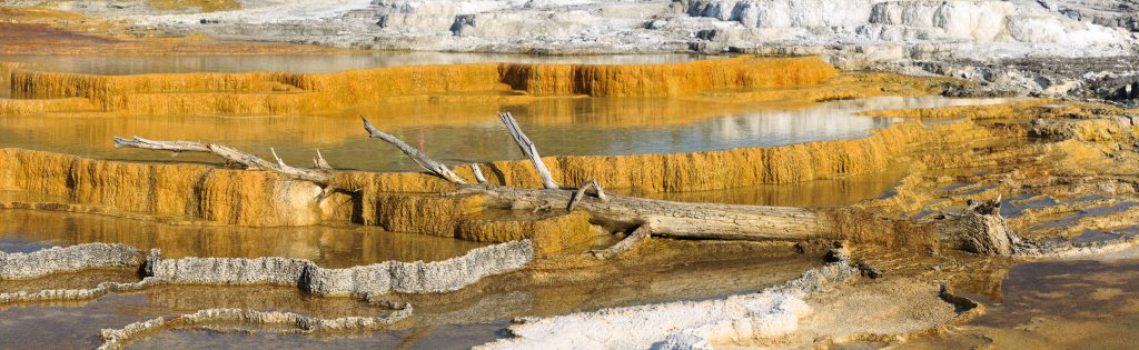 Yellowstone - Mammoth Hot Springs (3844)
