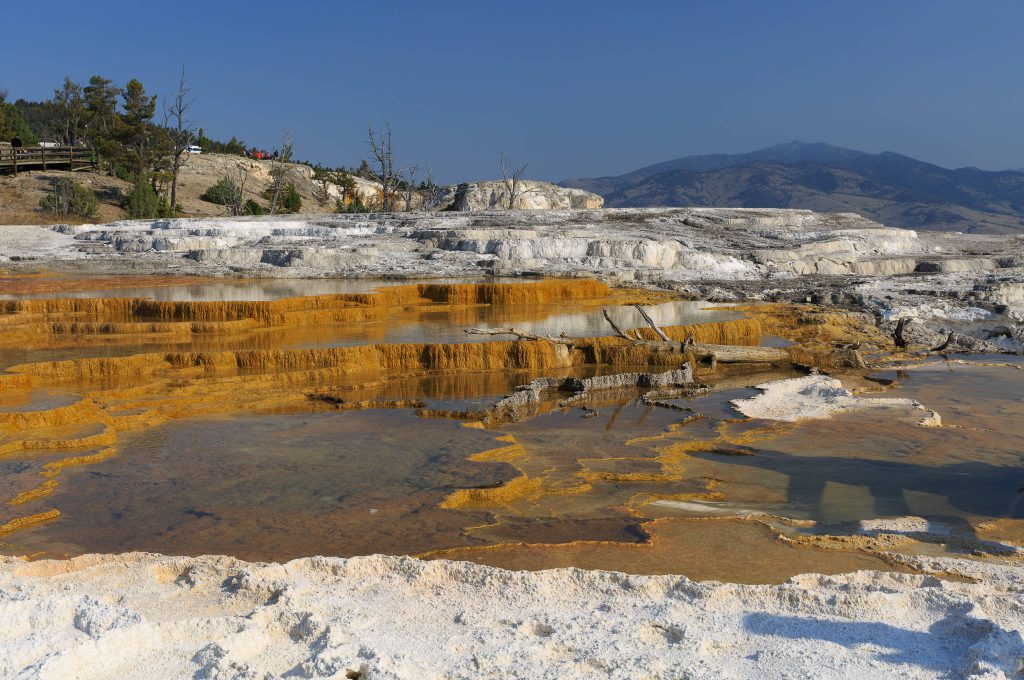 Yellowstone - Mammoth Hot Springs (3847)