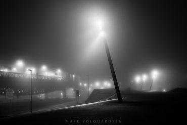 Baumwall in fog