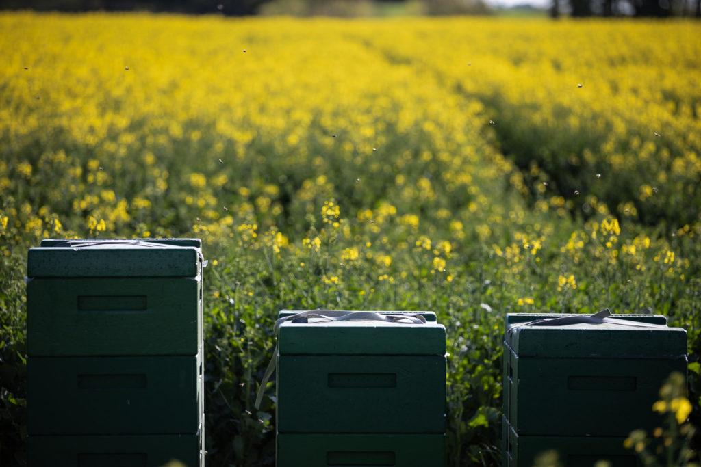 Bienen bei der Arbeit (0024)