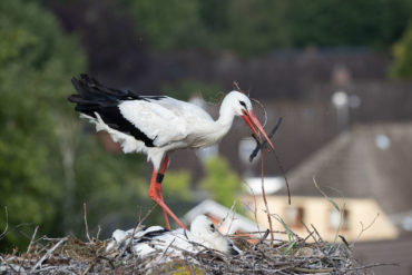 Finally the old stork was here!