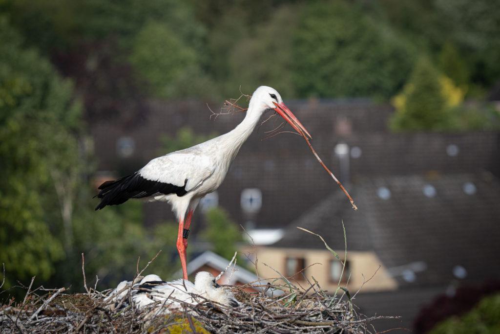 Old Stork (0310)