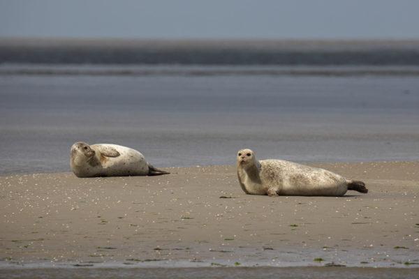 Seal Safari 2019 (0105)
