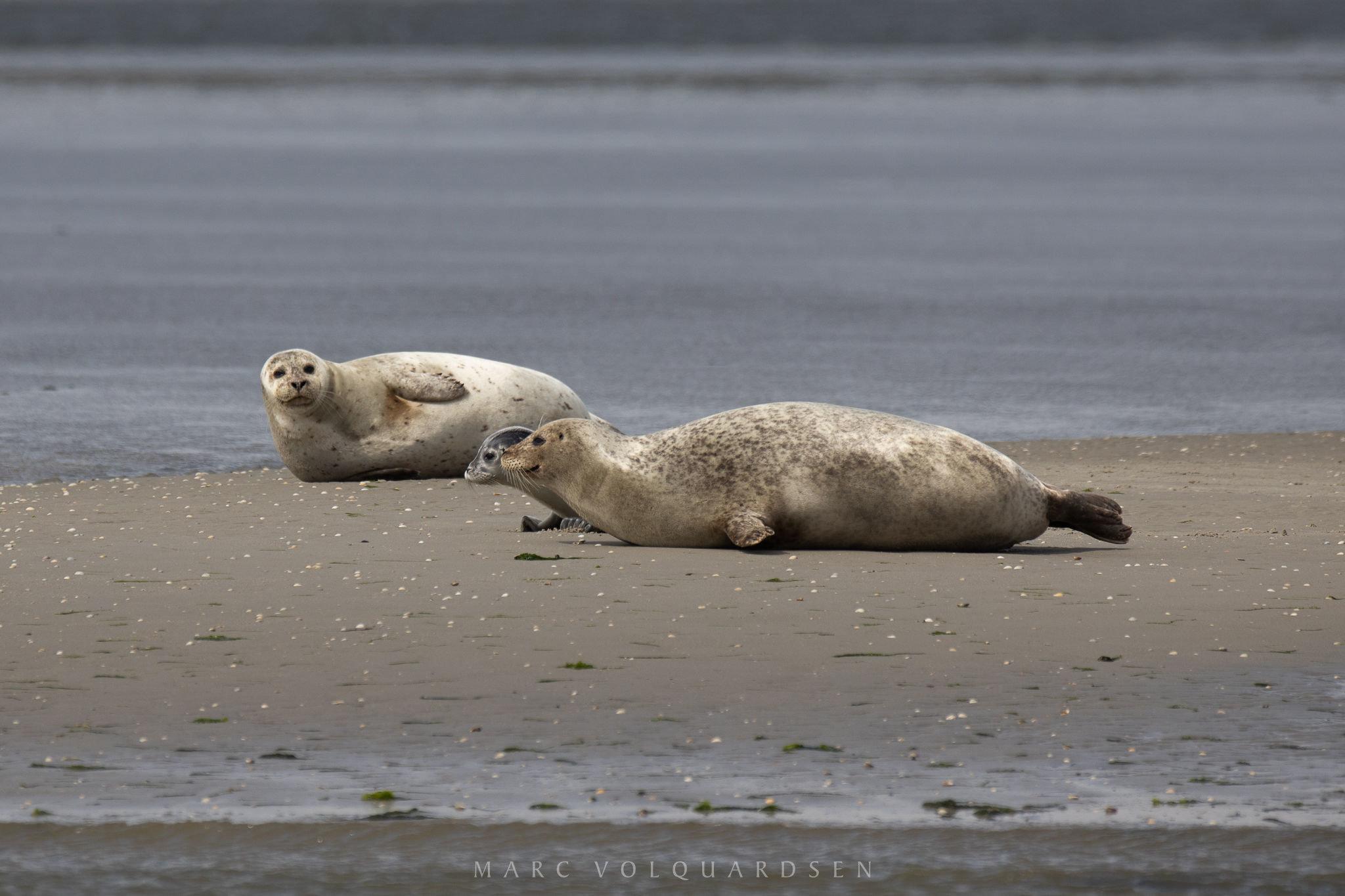 Seal Safari 2019 (0115)