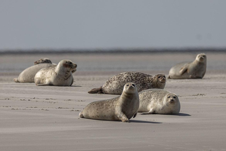 Who's looking? (seal safari 2019)