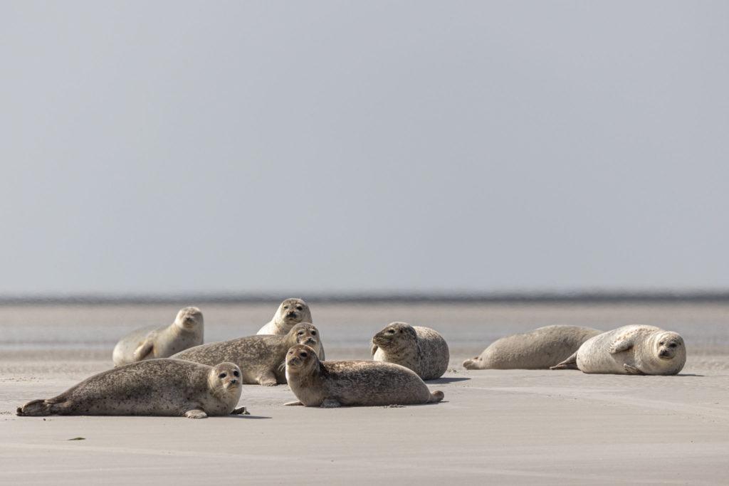 Seal Safari 2019 (0314)