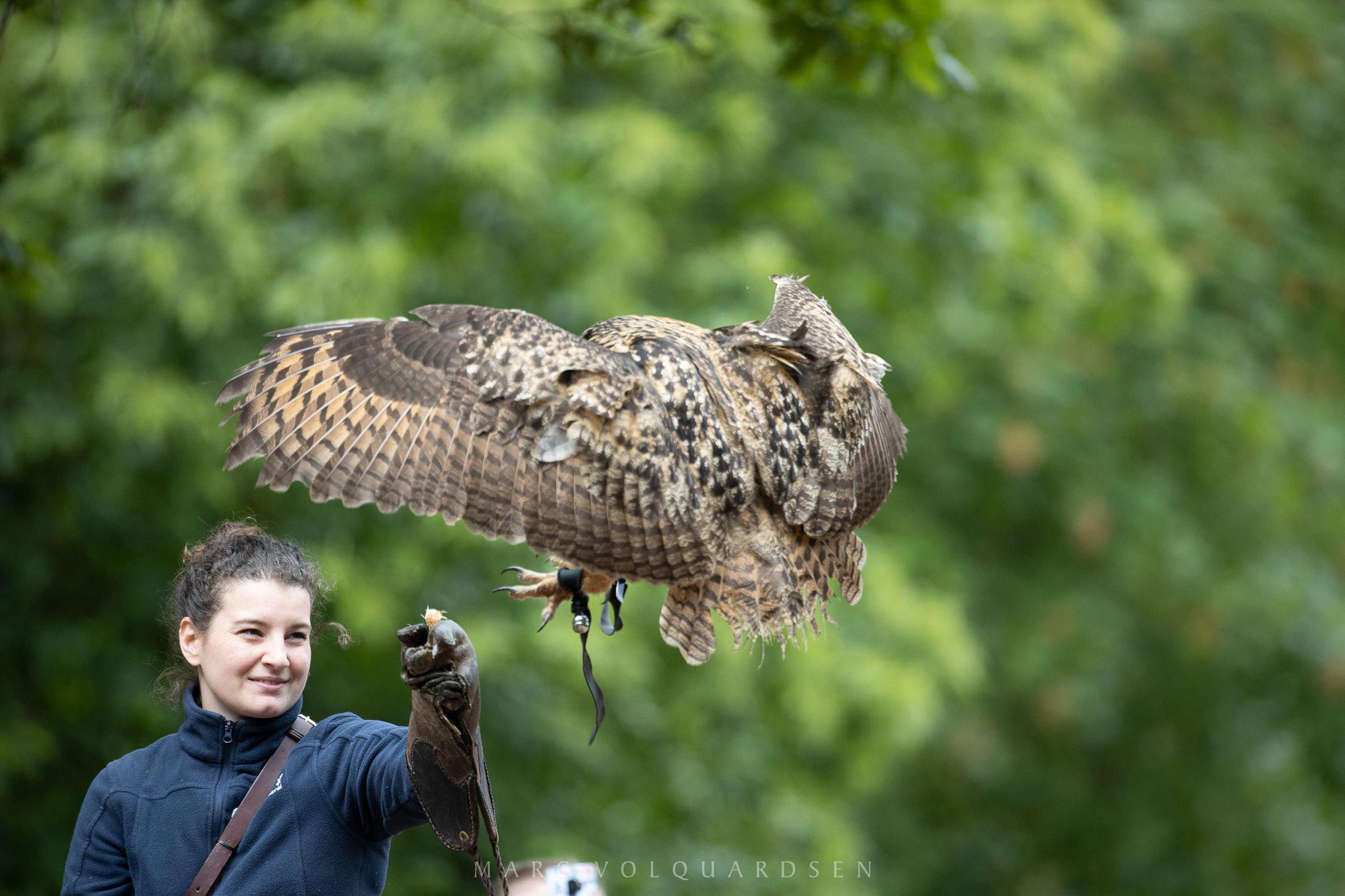 Wildlife Park Schwarze Berge - Owl Approaching (0497)