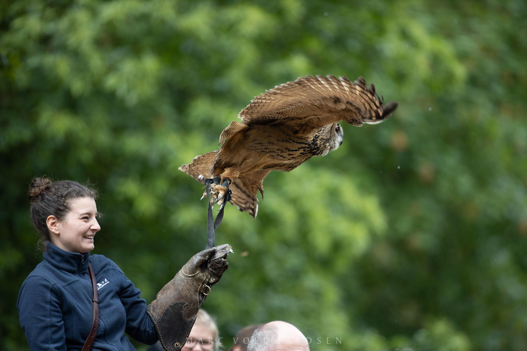 Wildlife Park Schwarze Berge - Owl departing (0500)