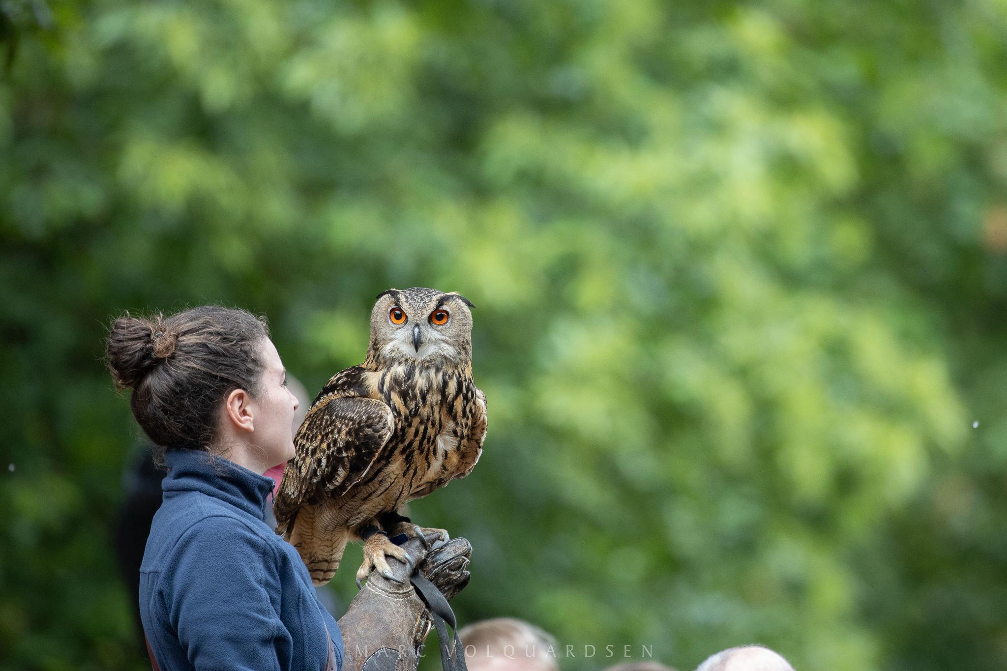 Wildlife Park Schwarze Berge - Owl outraged (0502)