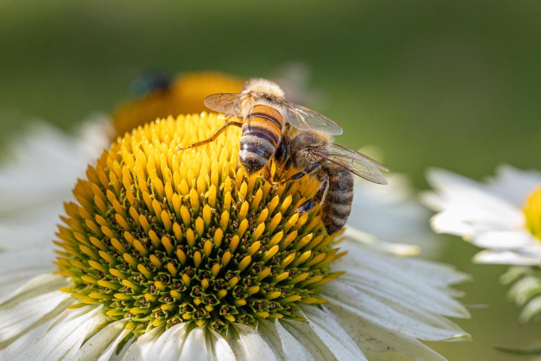Hey — get off my nectar source!