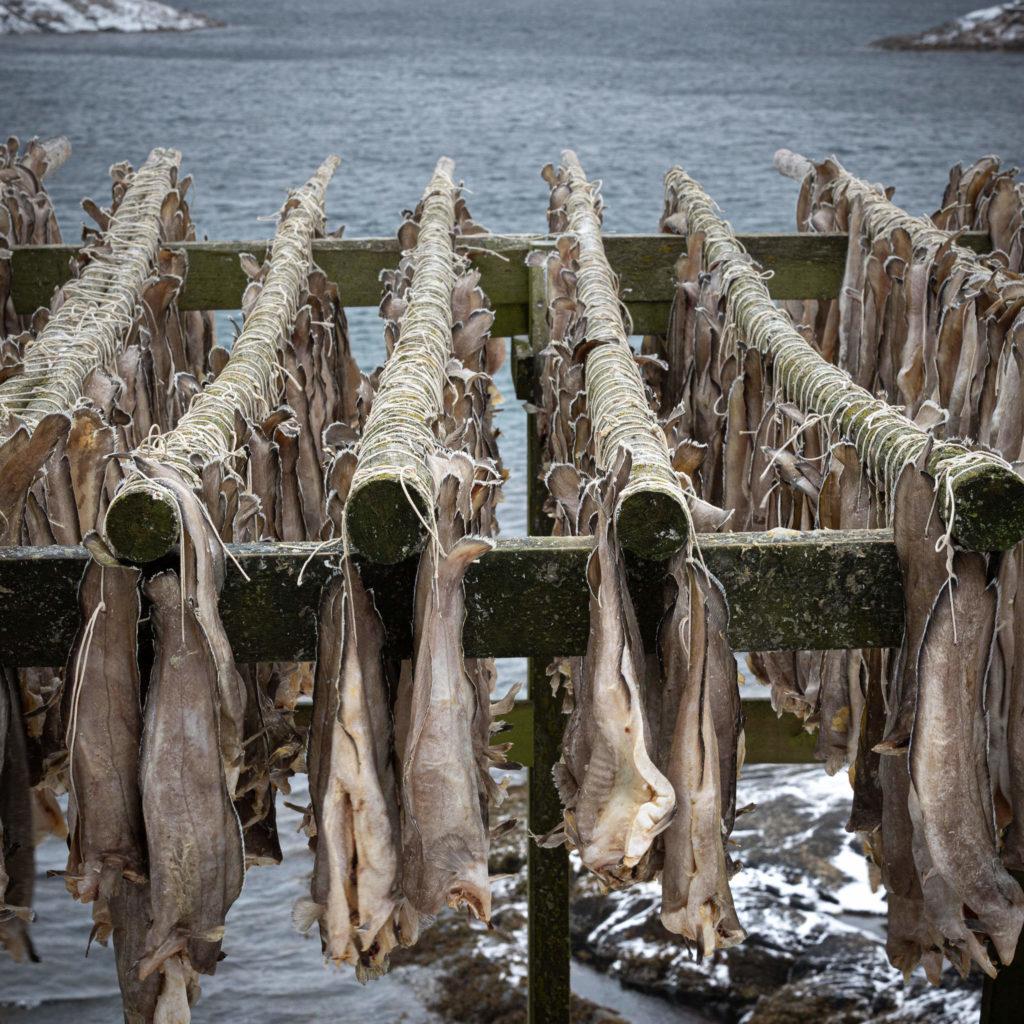Hennigsvær - Stockfish (3433)