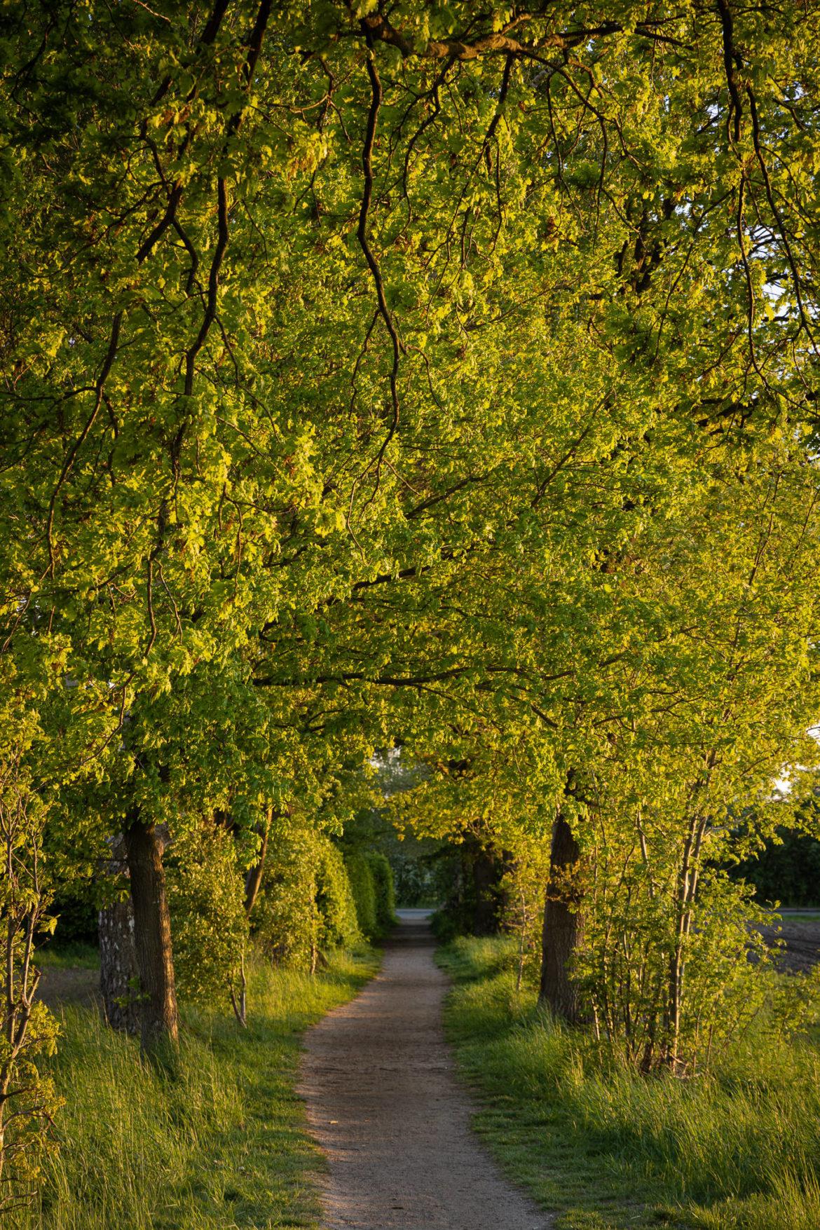 Buchholz - Grün (0005)