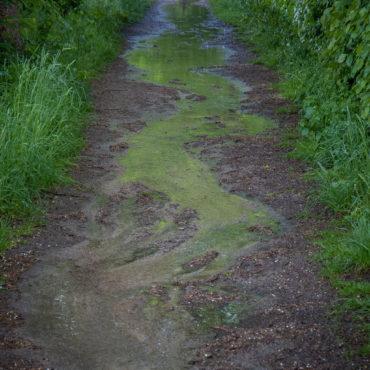 Grüner Bachlauf
