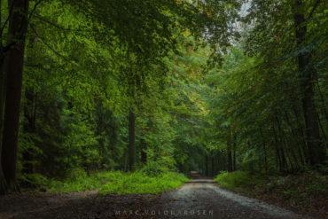 Eissendorf Forest