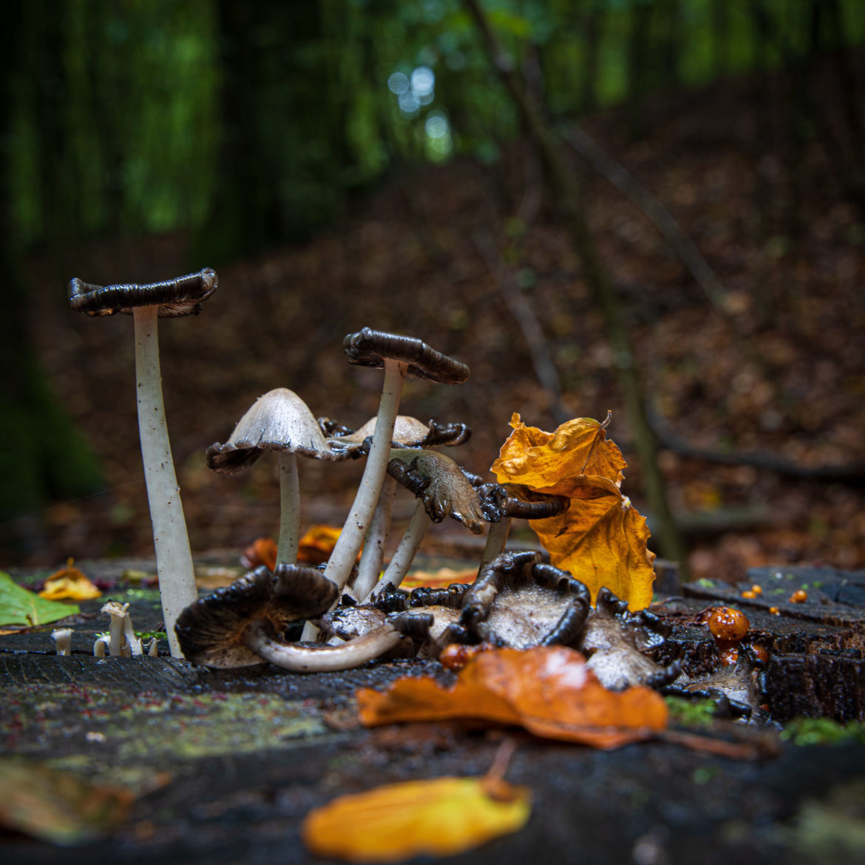 Mushrooms in Eissendorf Forest