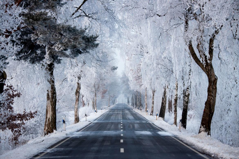Ice Trees (0065)