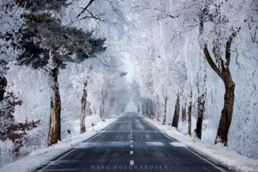Birch avenue icetrees