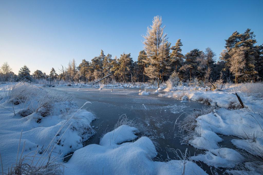 Frozen Moor Landscape (0075)