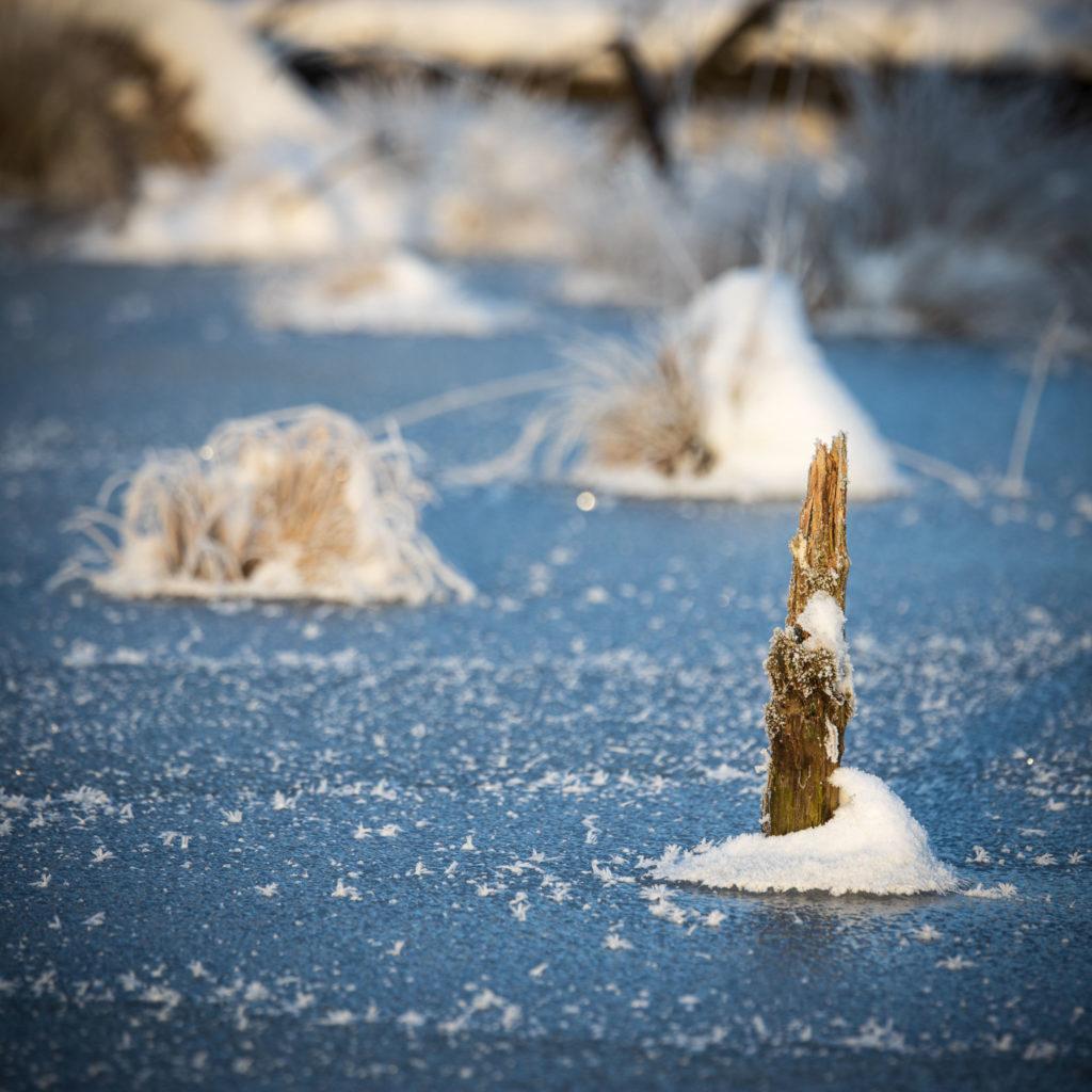 Frozen Moor (0082)