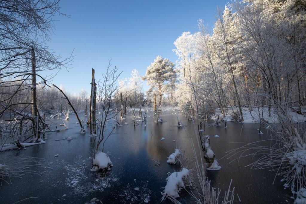 Tister Bauernmoor im Eis (0110)