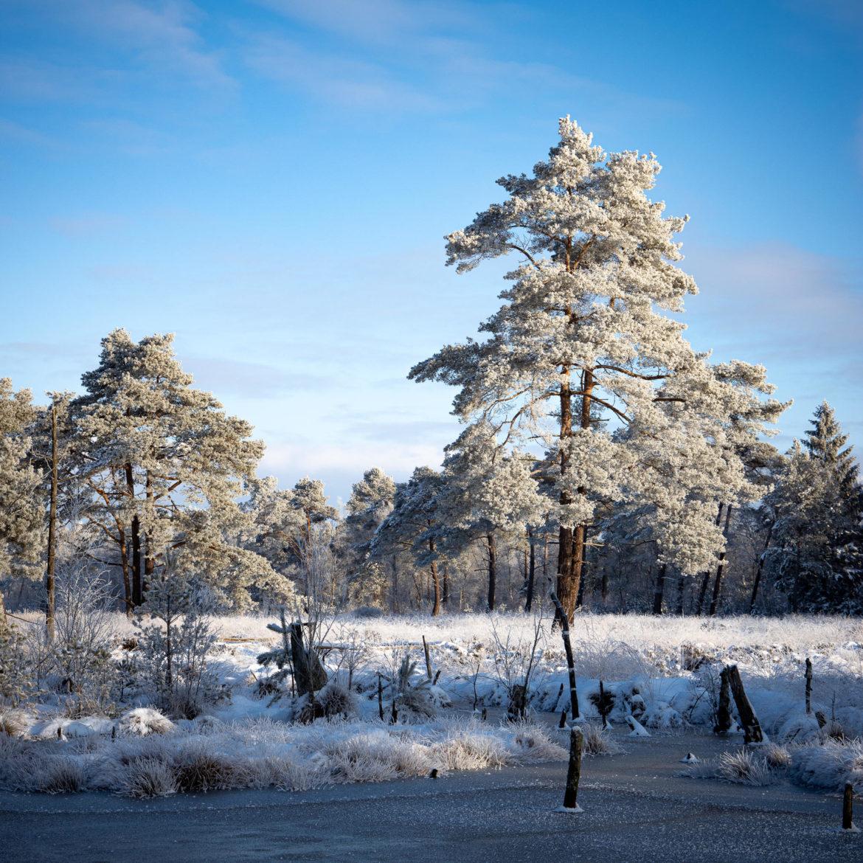 Tister Bauernmoor im Eis (0135)