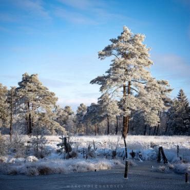 Icy Moor Landscape