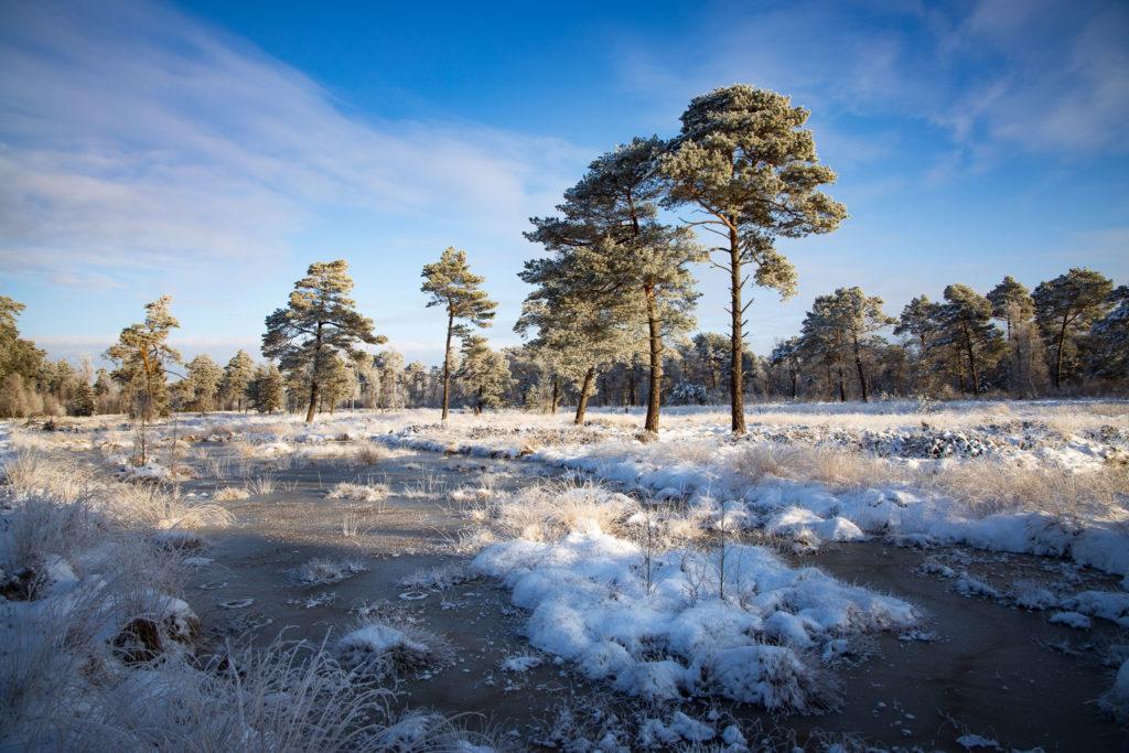 Tister Bauernmoor im Eis (0143)