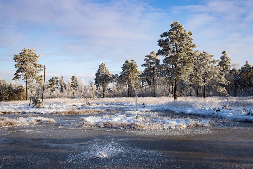Tister Bauernmoor im Eis (0155)
