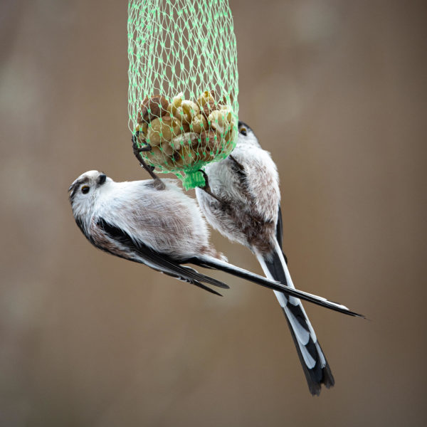 Long-tailed tits at nut net (0036)