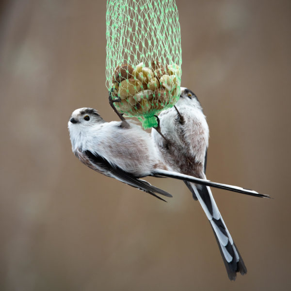 Long-tailed tits at nut net (0041)