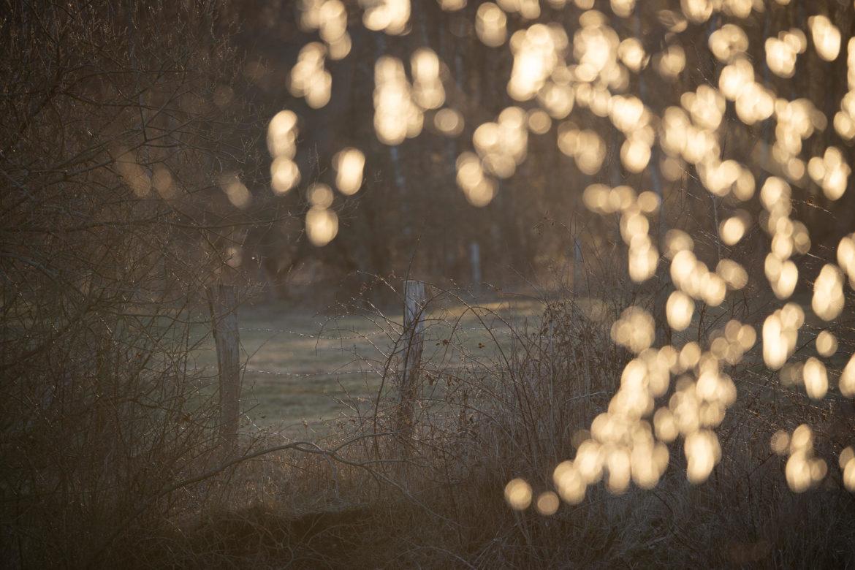 Steller See - Backlight (0034)