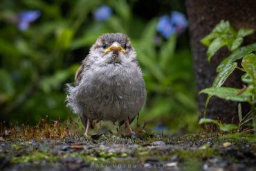 Little Sparrow an seinem härtesten Tag
